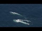 знакомьтесь--синий кит!!!